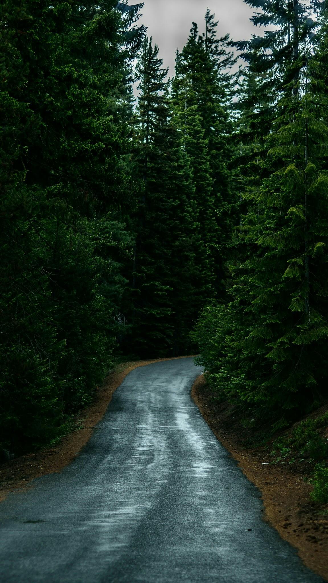 Road to Forest Dew iPhone Wallpaper iphoneswallpapers com
