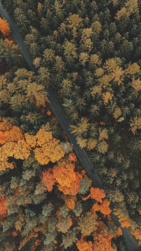 Autumn Fall Road Aerial View IPhone Wallpaper
