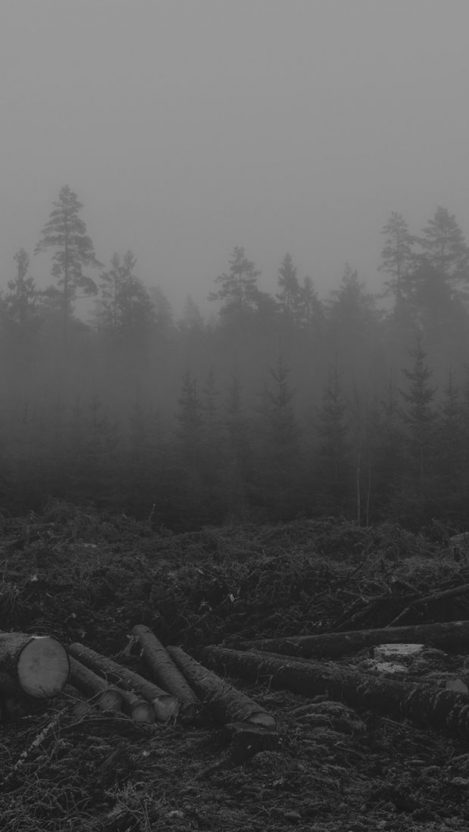 Loggers Forest Mist iPhone Wallpaper iphoneswallpapers com