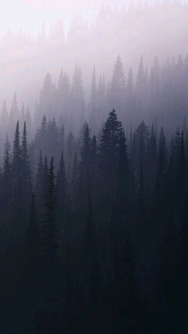 Mist Fog Forest Trees iPhone Wallpaper iphoneswallpapers com