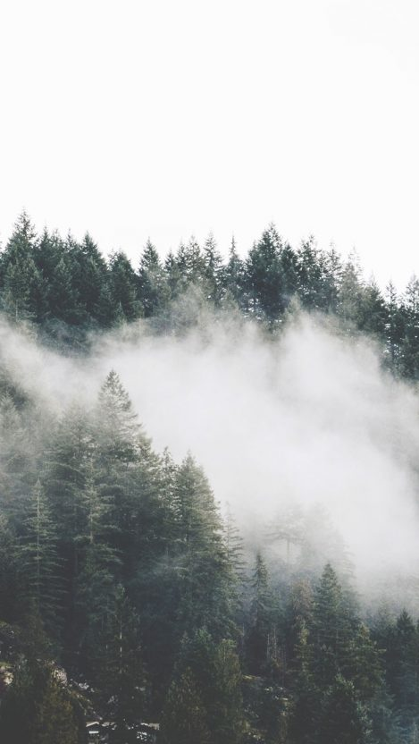 Mist Forest Trees Mountains iPhone Wallpaper iphoneswallpapers com