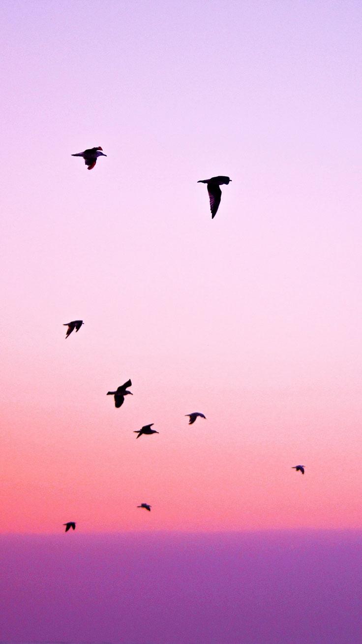 Pink birds iPhone Wallpaper iphoneswallpapers com