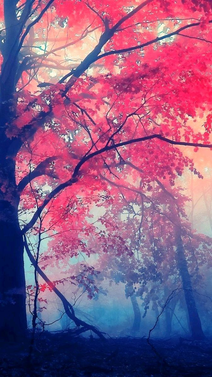 Red Leaf Tree Autumn Forest iPhone Wallpaper iphoneswallpapers com