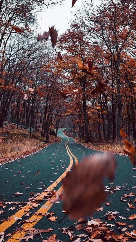 Autumn Road Nature Beautiful IPhone Wallpaper
