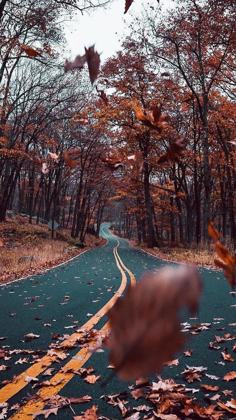 Autumn Road Nature Beautiful iPhone Wallpaper iphoneswallpapers com