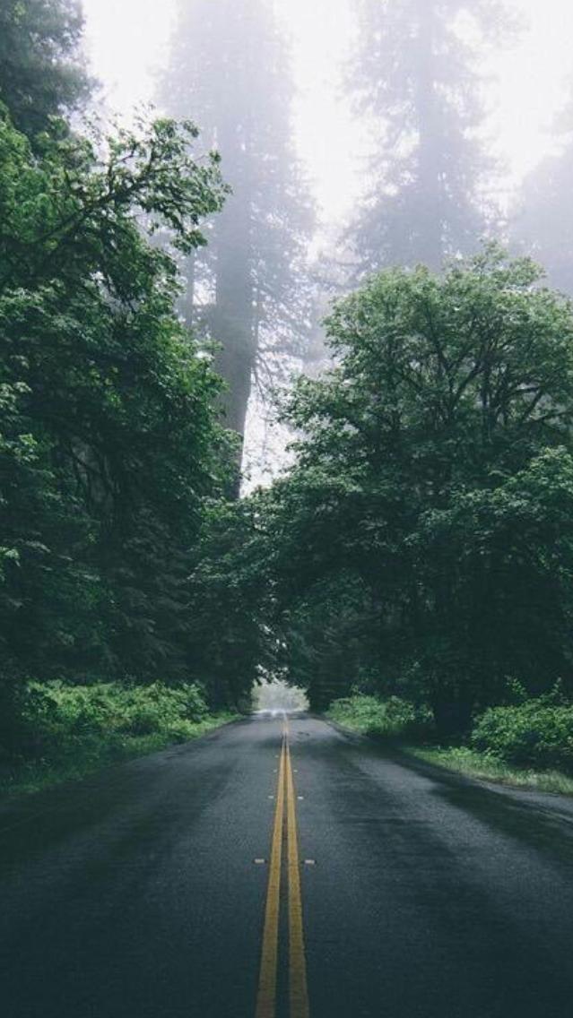 Beautiful Green Forest Road iPhone Wallpaper iphoneswallpapers com