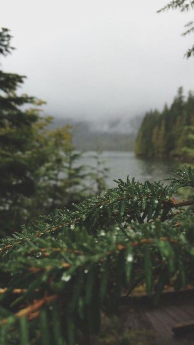 Nature Rain on Trees Beautiful iPhone Wallpaper iphoneswallpapers com