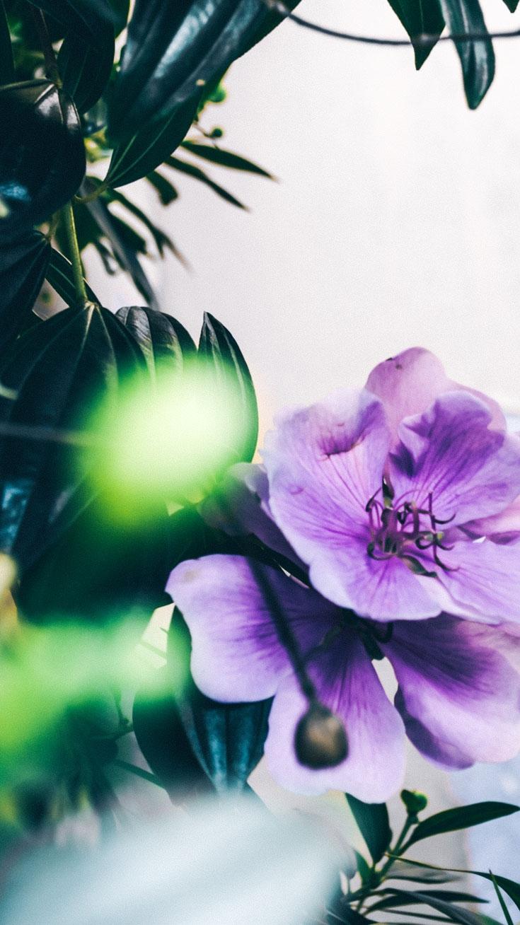 Tropical flower iPhone Wallpaper iphoneswallpapers com