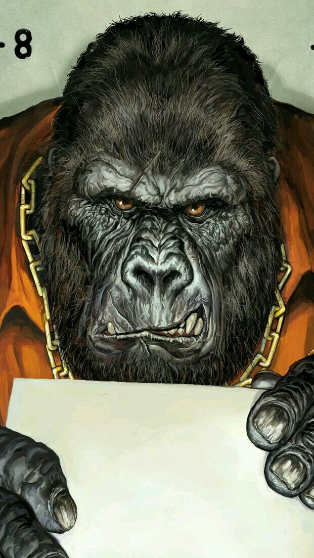 Angry Gorilla Face Silverback Prisoner iPhone Wallpaper iphoneswallpapers com