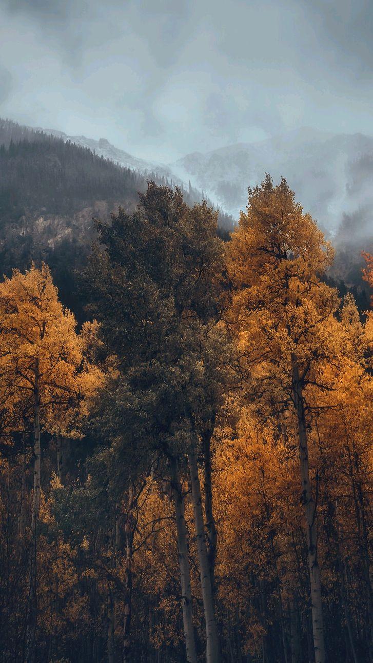 Autumn Forest Mist iPhone Wallpaper