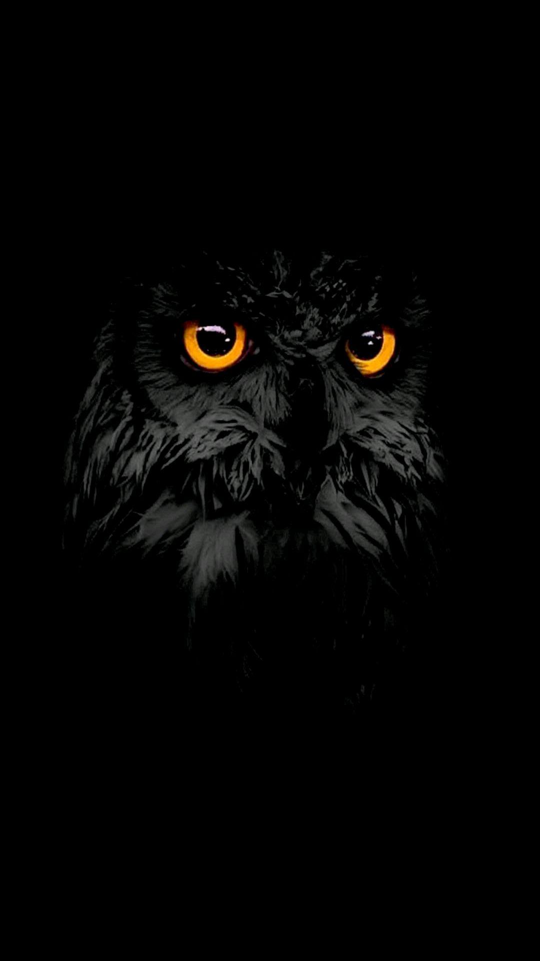 Black Owl Eyes iPhone Wallpaper
