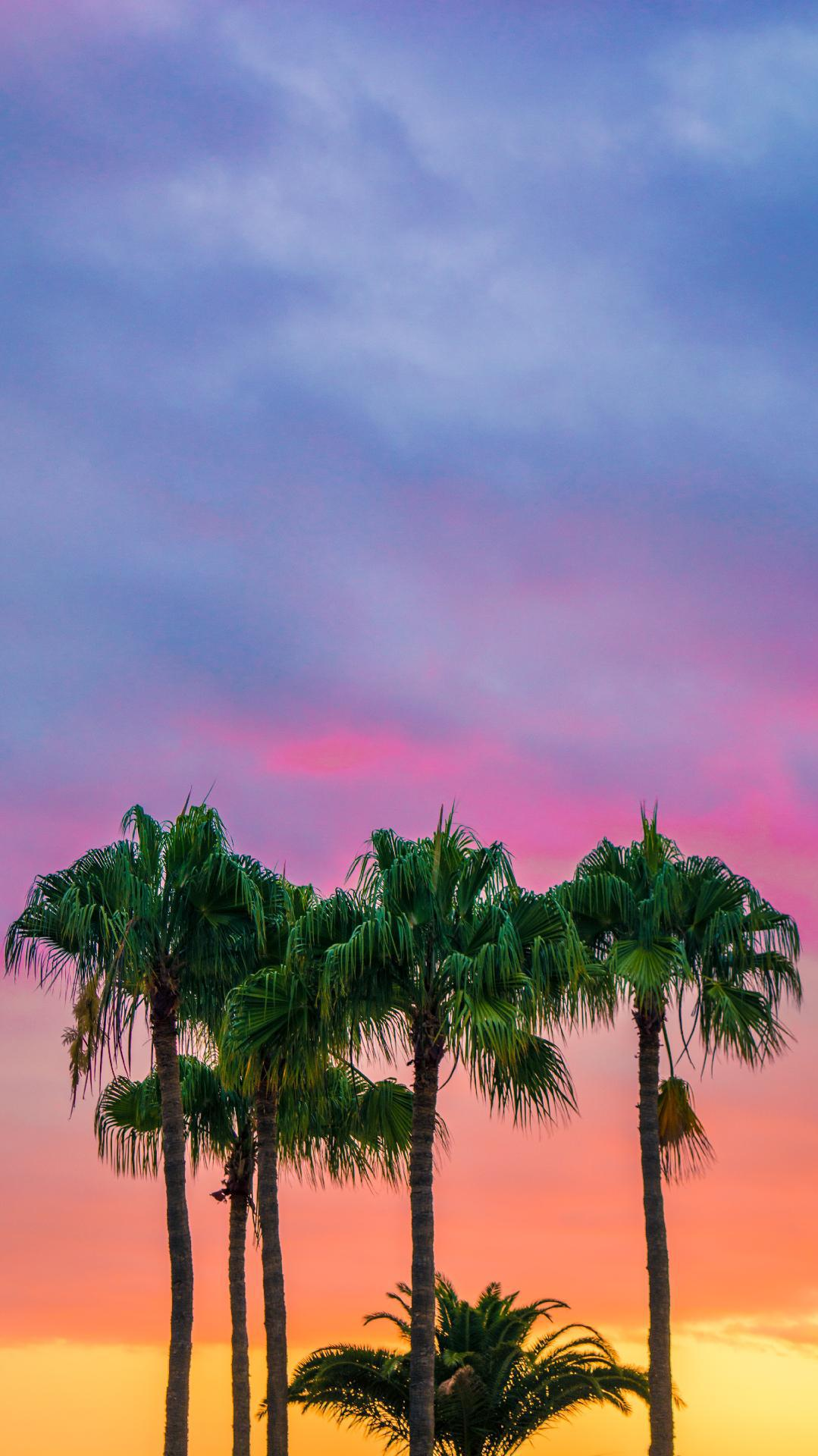 Nature Palm Trees Sky iPhone Wallpaper