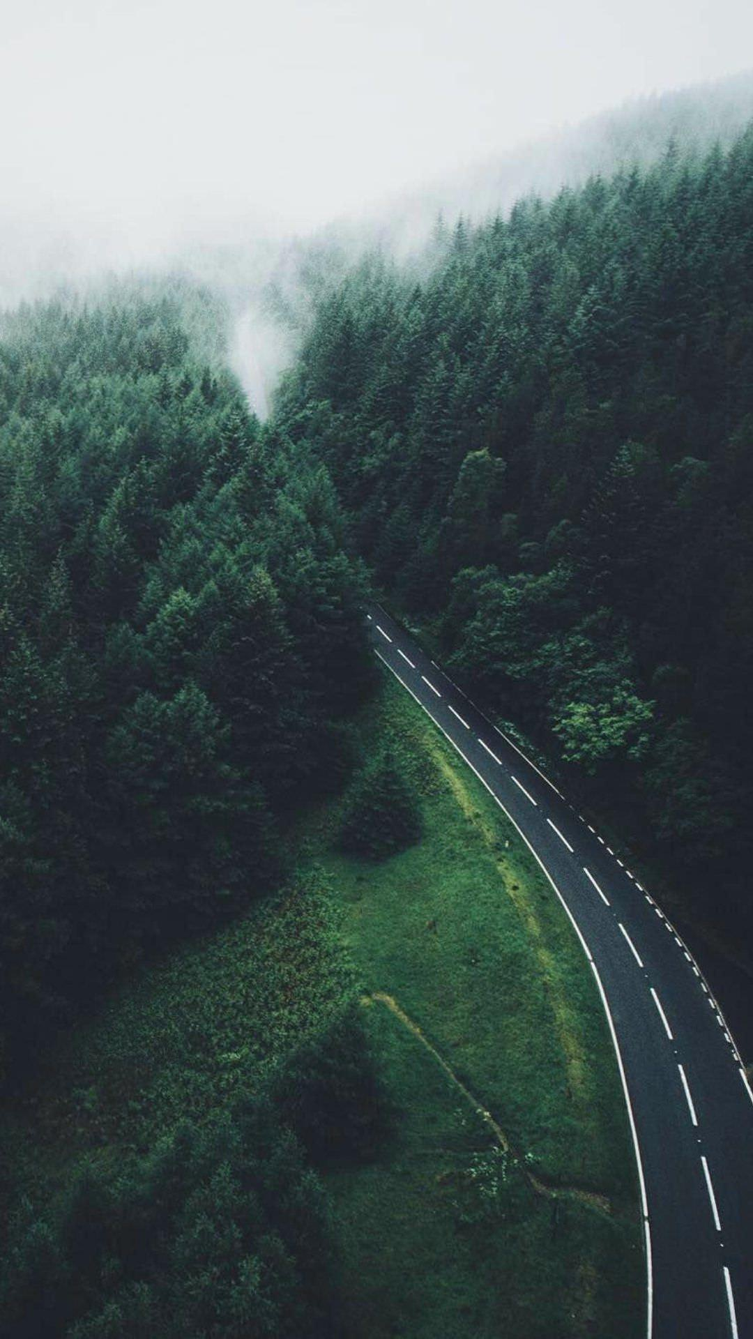 Nature Road Green Forest iPhone Wallpaper