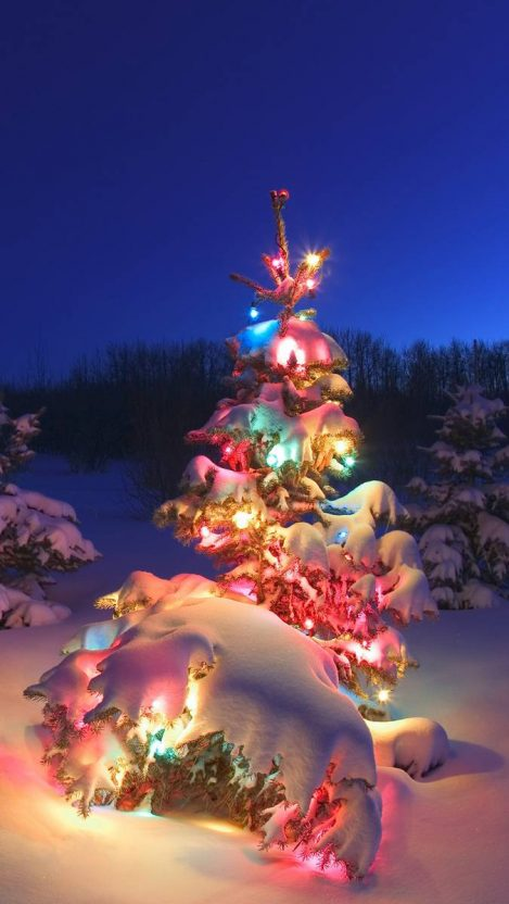 Snow Christmas Tree Colorful iPhone Wallpaper