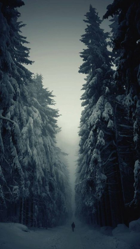 Snow Forest Lonely Walk iPhone Wallpaper