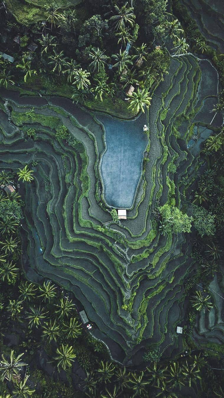 Vietnam Farms Nature iPhone Wallpaper