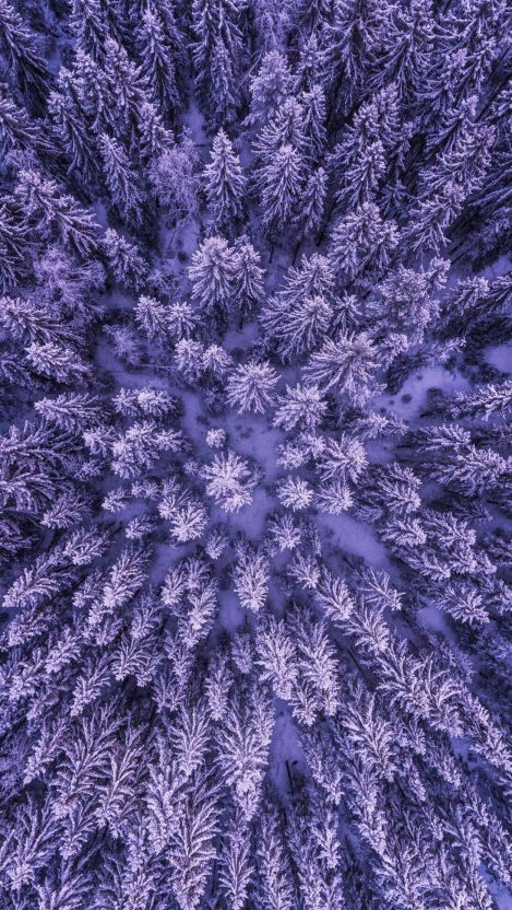 Winter Trees iPhone Wallpaper