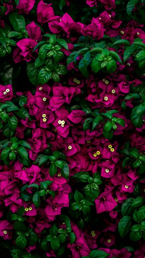 Colorful Flower Plants iPhone Wallpaper