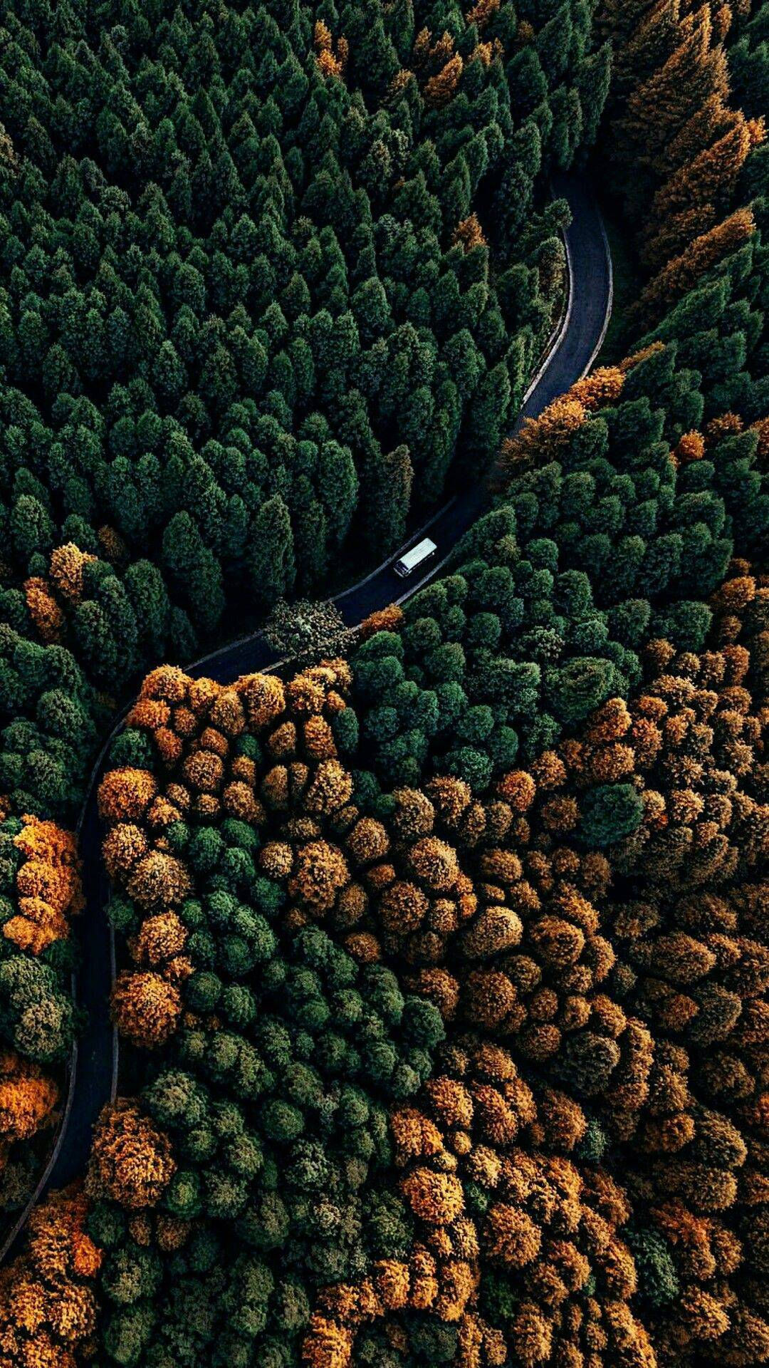 Deep Forest Road Nature iPhone Wallpaper