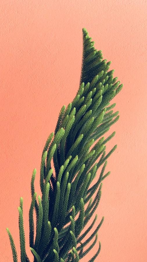 Designer indoor Plant iPhone Wallpaper