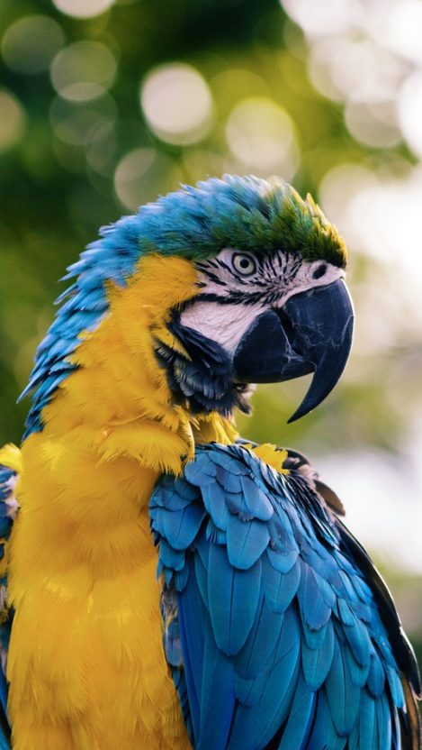 Macaw Parrot iPhone Wallpaper