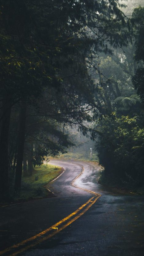 Nature Road Green Forest Trees iPhone Wallpaper