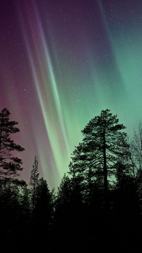 Nothern Lights Night Tree Sky iPhone Wallpaper