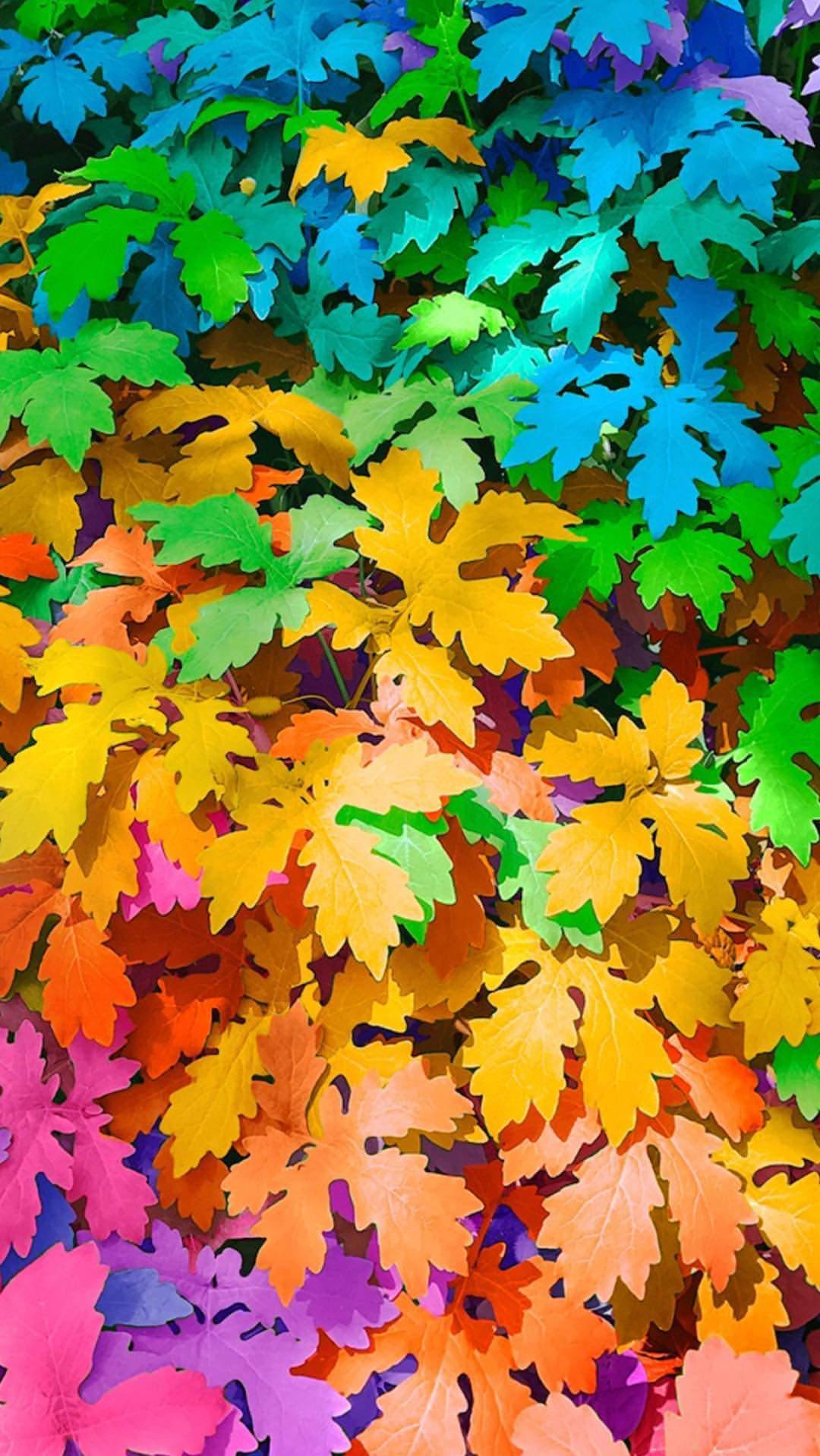 Colorful Autumn Plants iPhone Wallpaper
