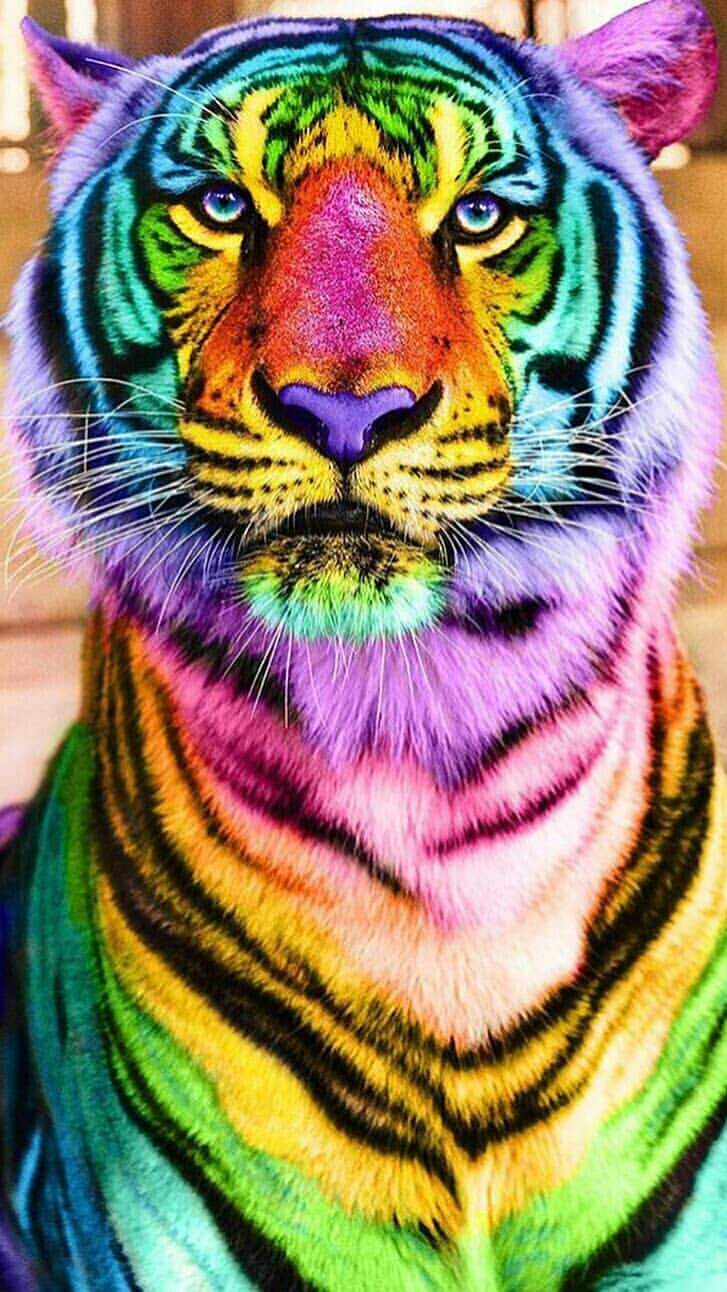 Colorful Tiger iPhone Wallpaper