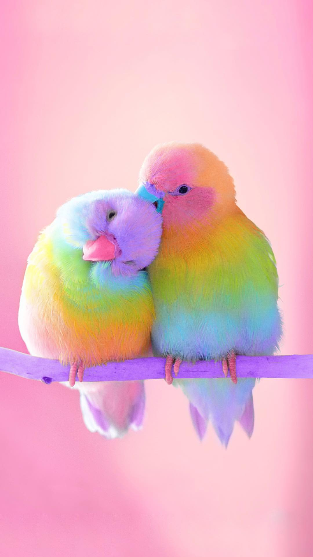 Love Birds Colorful iPhone Wallpaper