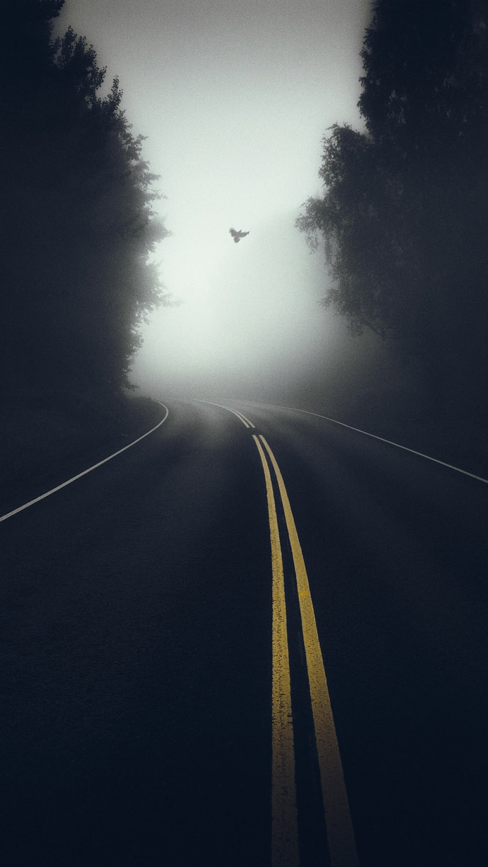 Nature Mist Road Morning iPhone Wallpaper