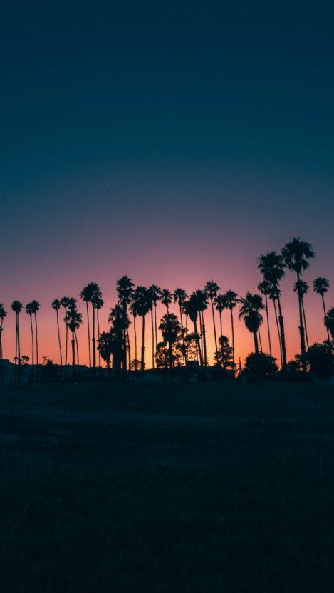 Santa Barbara Palm Trees Sunset iPhone Wallpaper