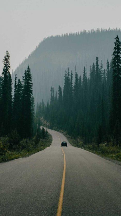 Alaska Trees Road Forest Nature iPhone Wallpaper