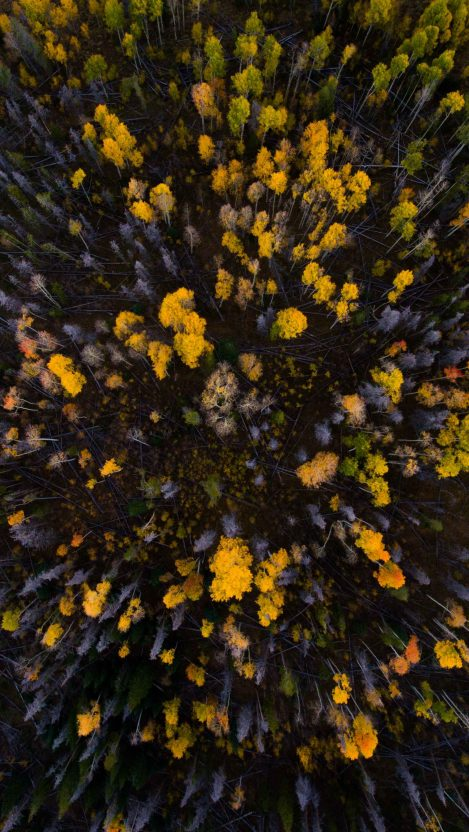 Autumn Forest Trees Sky View iPhone Wallpaper