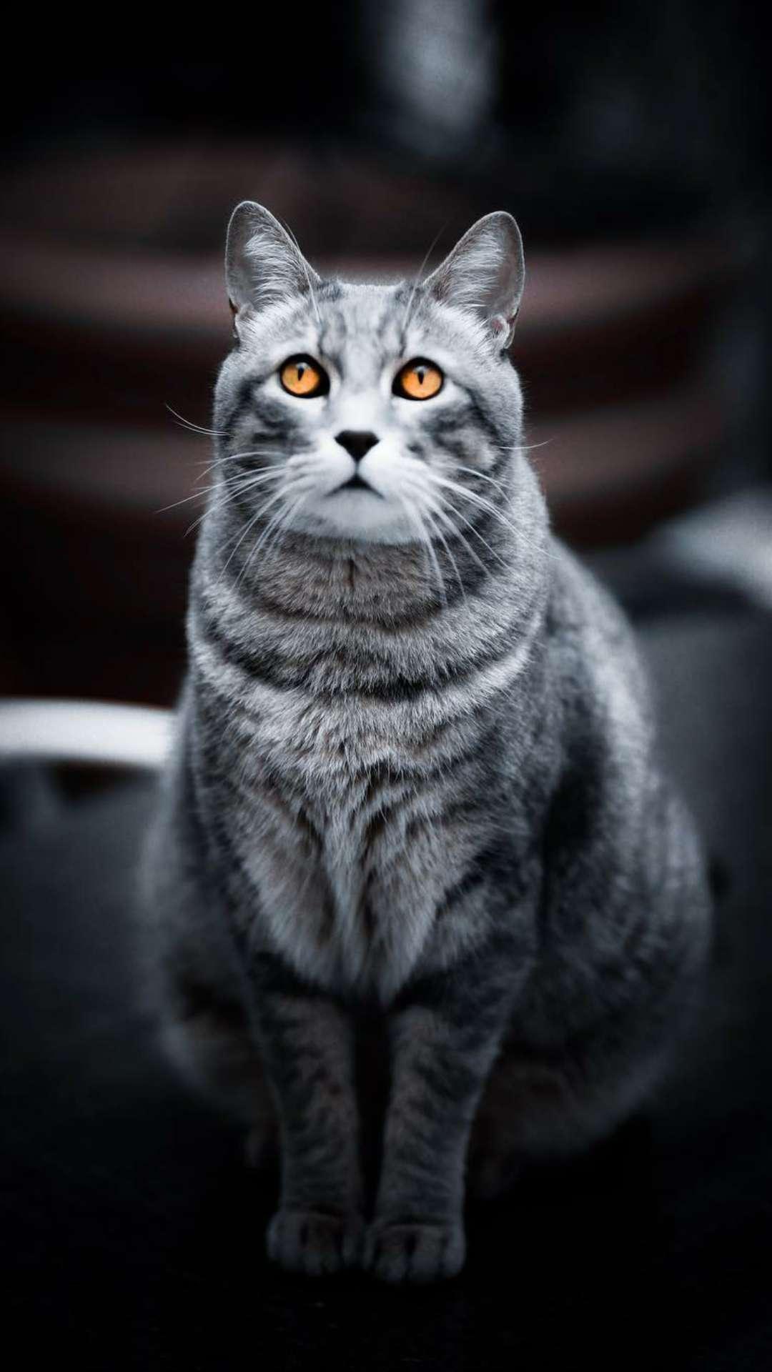 Dark Cat iPhone Wallpaper