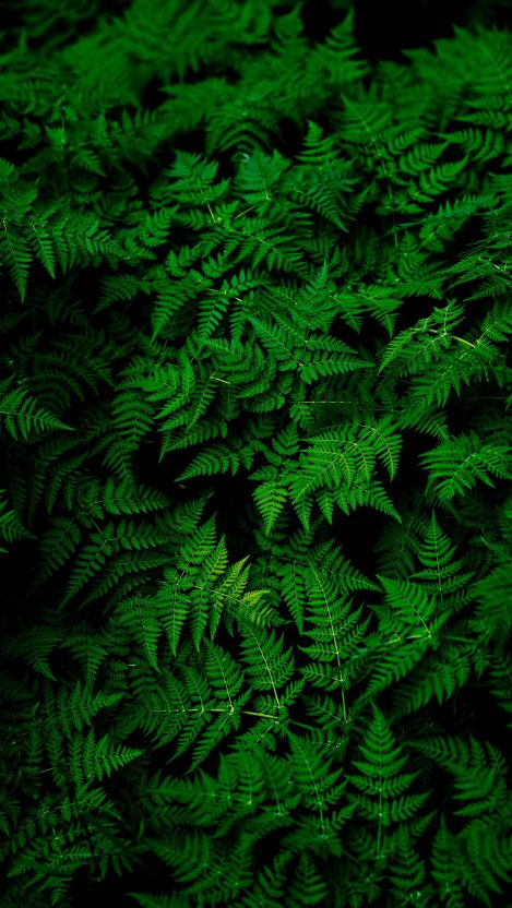 Green Forest Plants iPhone Wallpaper