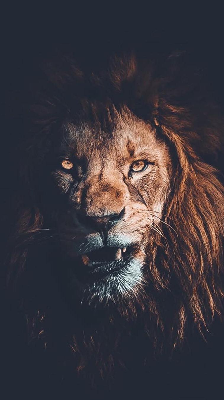 King Lion Face iPhone Wallpaper