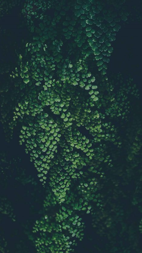 Mini Green Plants iPhone Wallpaper