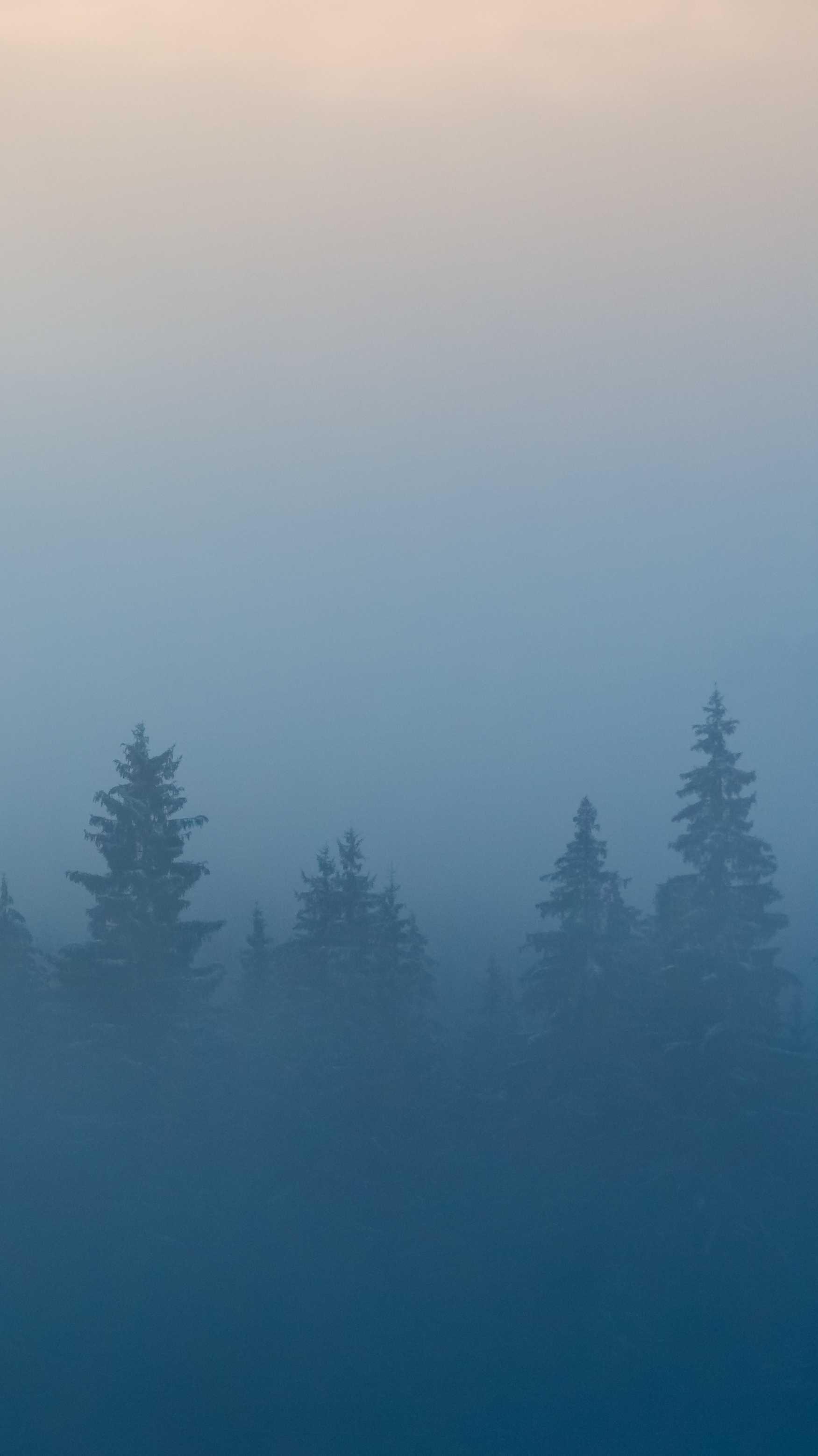 Minimal Mist Nature Trees iPhone Wallpaper