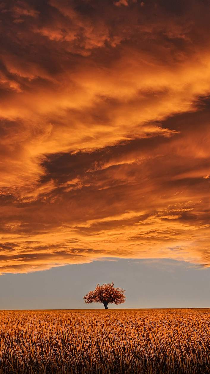 Nature Sunset Clouds Tree iPhone Wallpaper