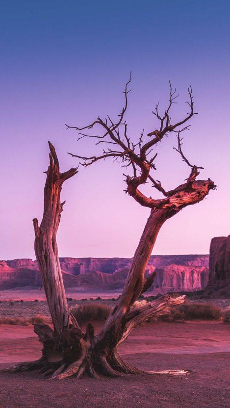 Old Tree in Desert Valley iPhone Wallpaper