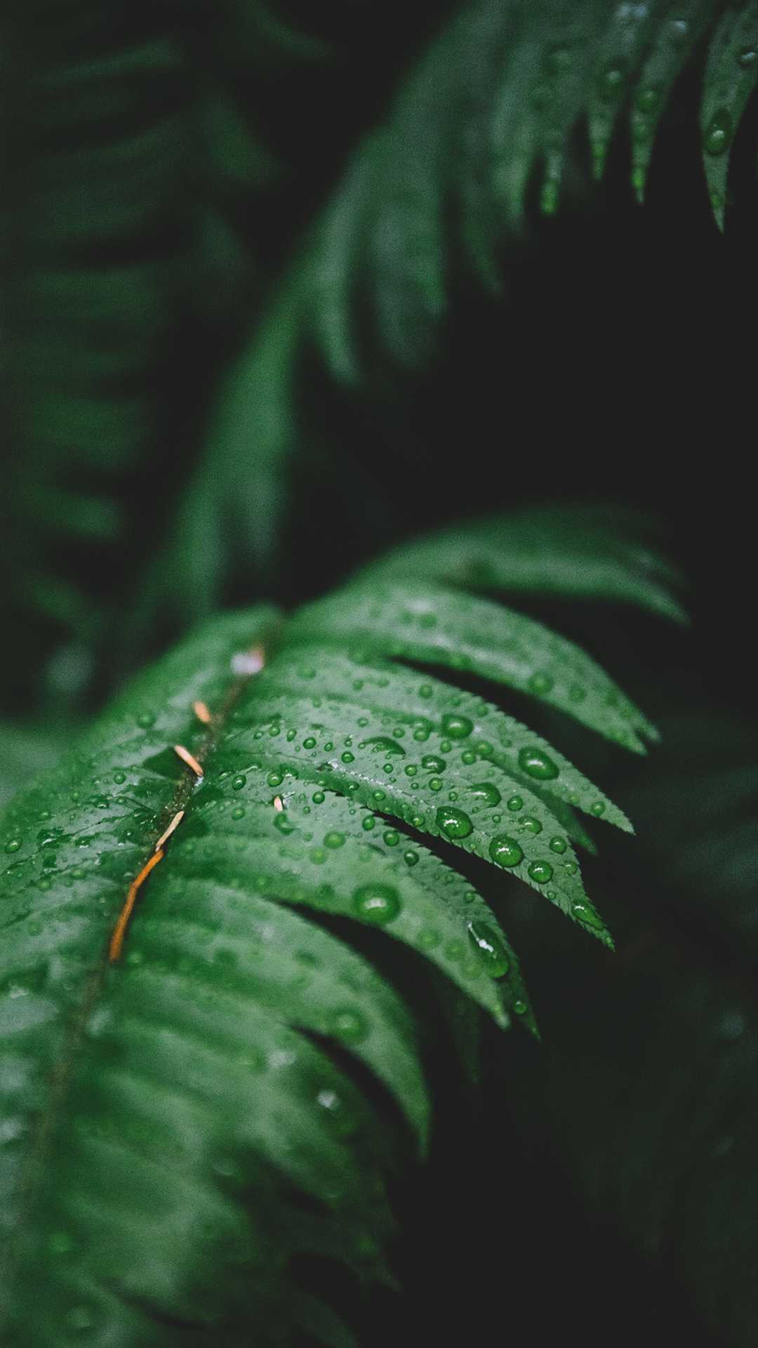 Water Drops in Forest Plant iPhone Wallpaper