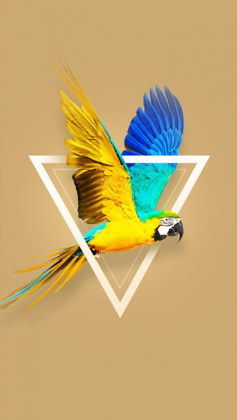 Blue and yellow macaw iPhone Wallpaper
