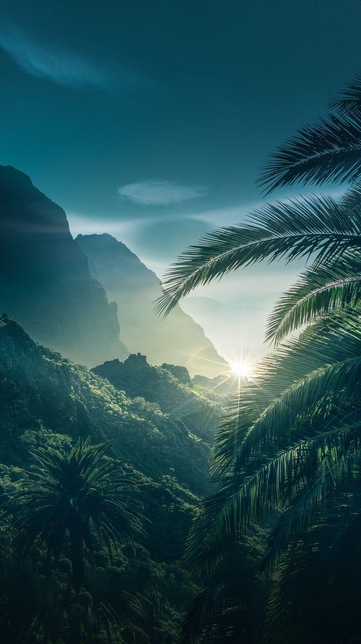 Green Forest Sunrise iPhone Wallpaper