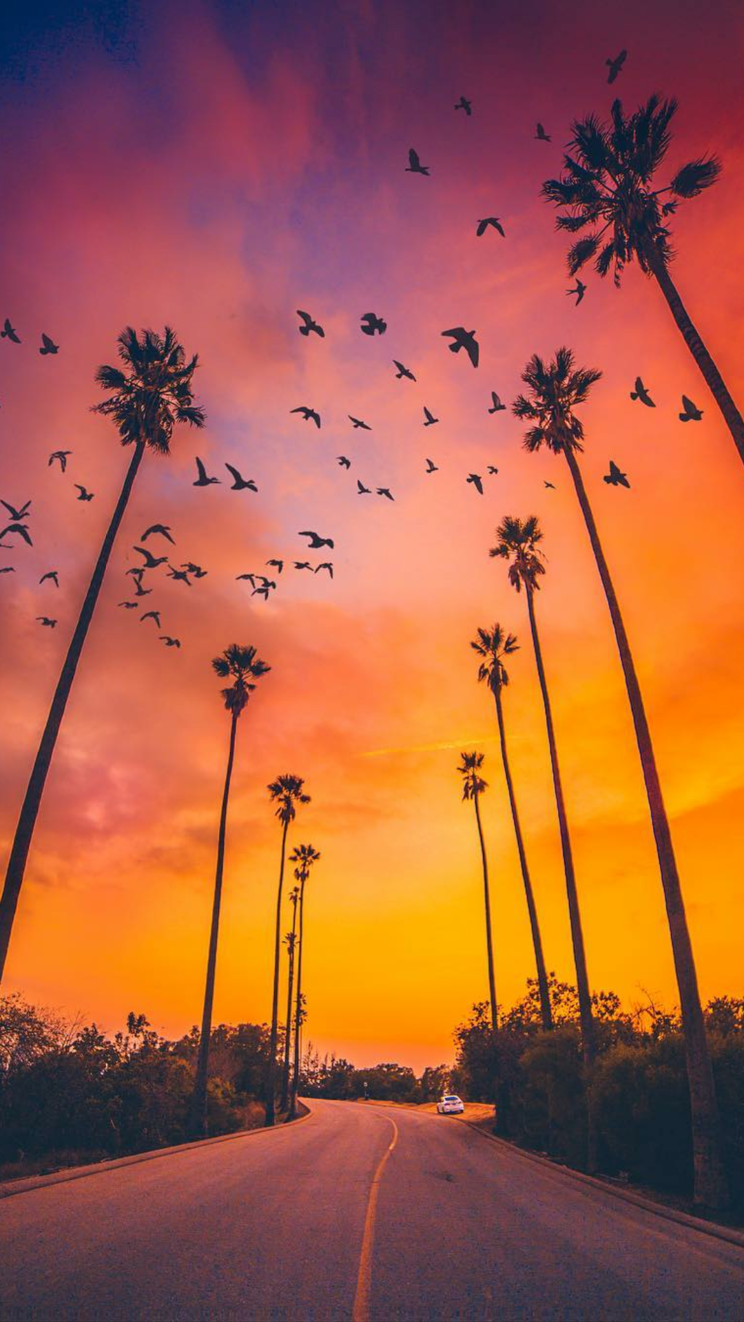 Palm Trees Sunset Nature iPhone Wallpaper