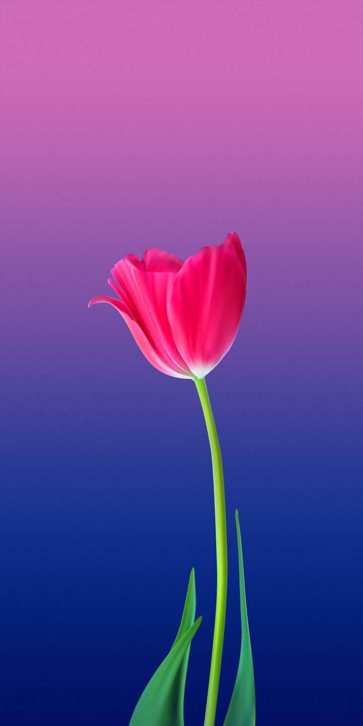 Red Flower Background HD iPhone Wallpaper