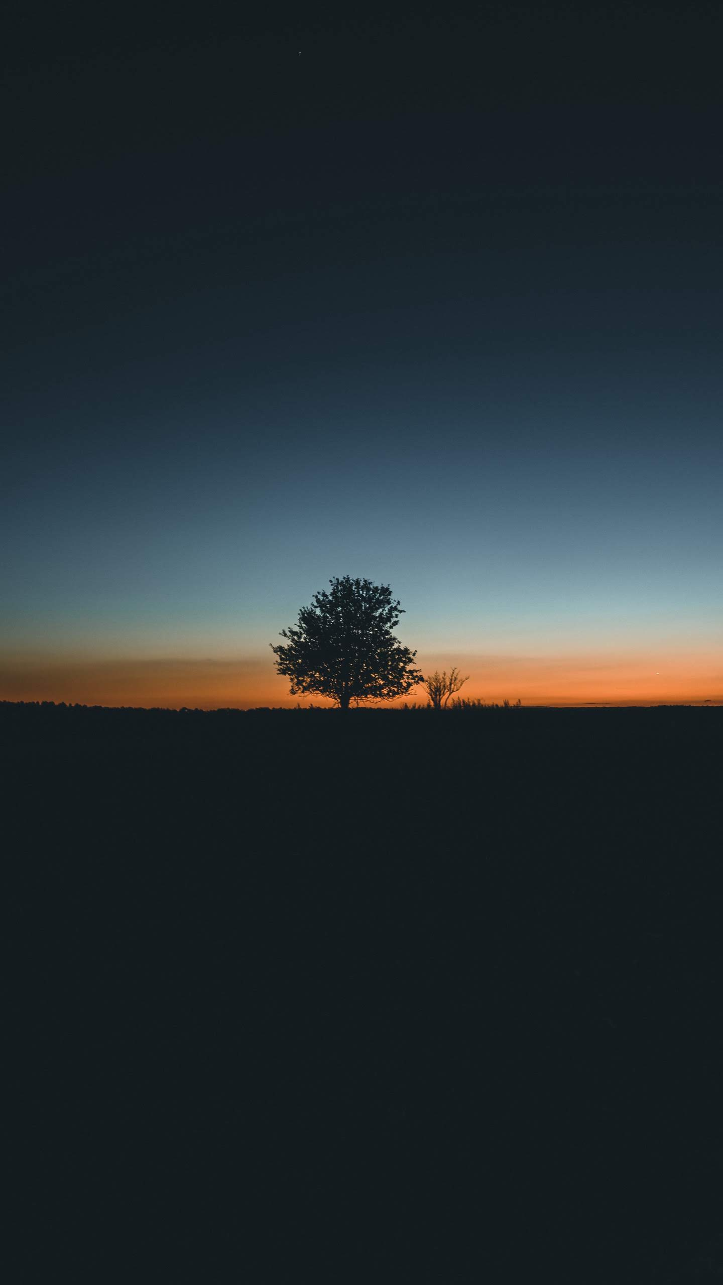 Tree Sunset iPhone Wallpaper