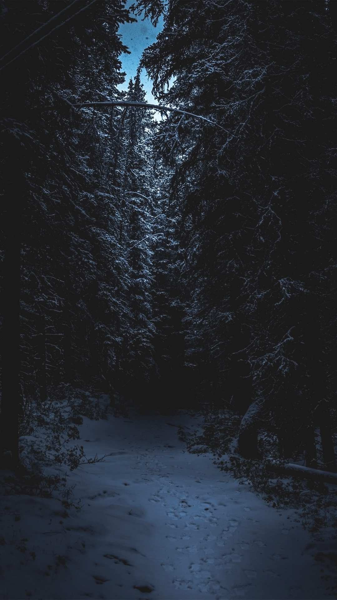 Winter Forest Snow iPhone Wallpaper