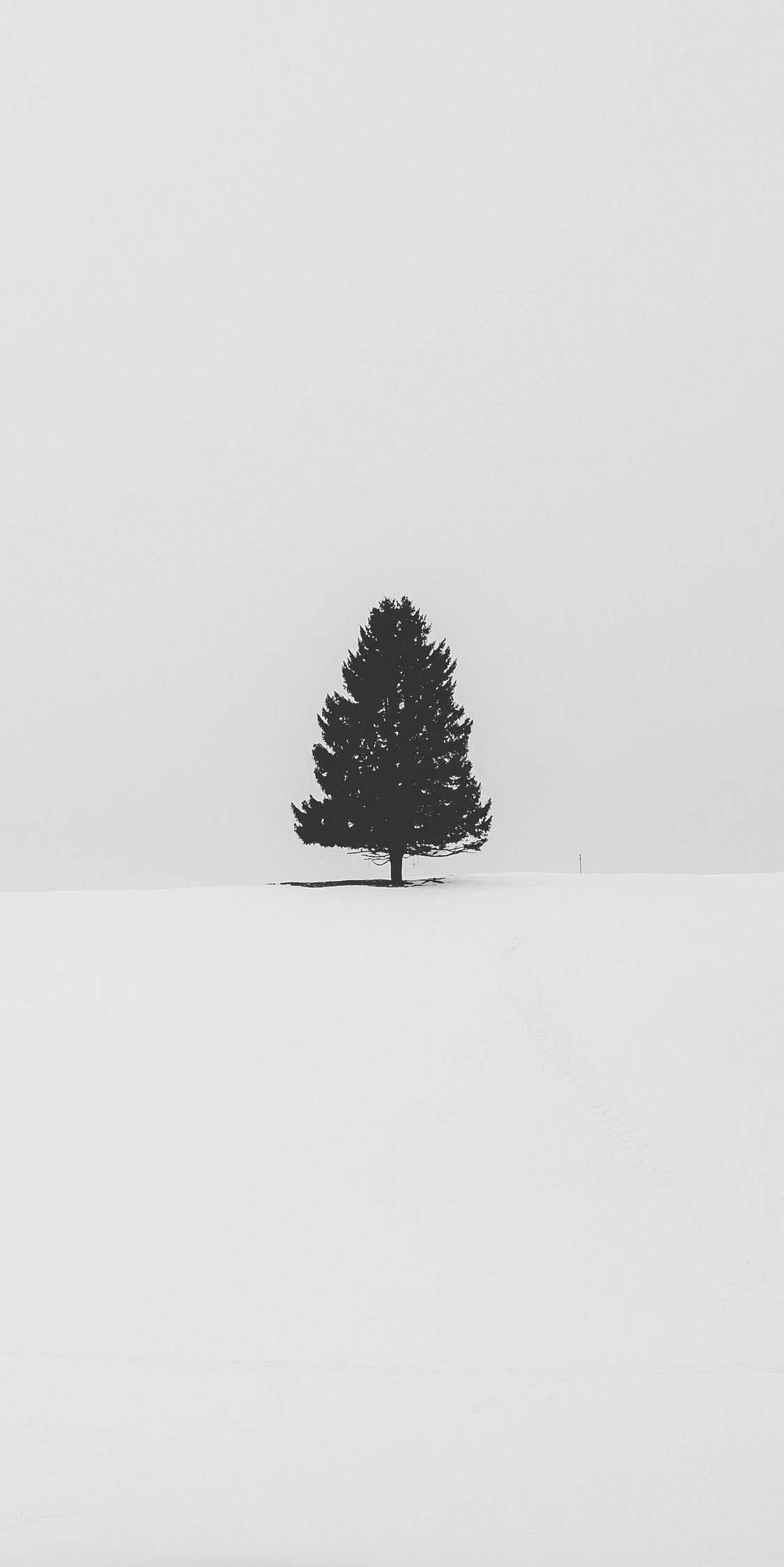 Christmas Tree in Snow iPhone Wallpaper