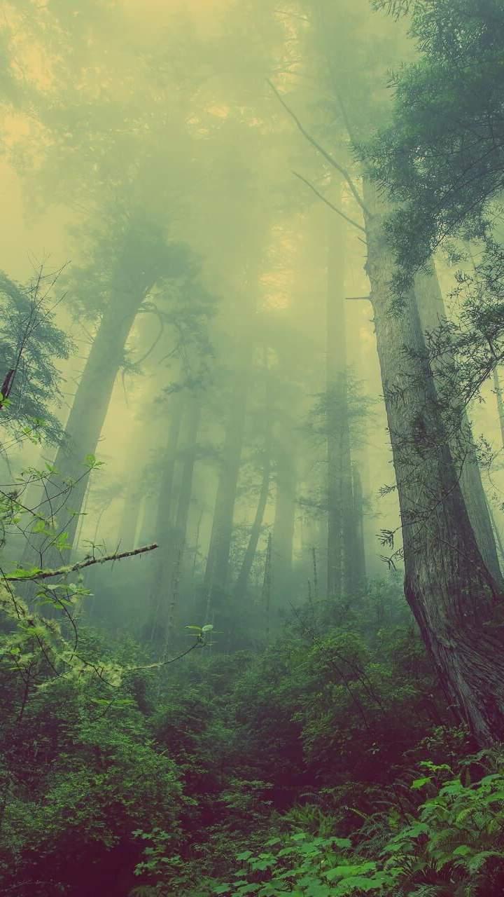 Jungle Mist Nature iPhone Wallpaper